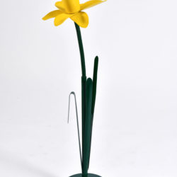 The image for Peter Bliss Daffodil 2 – 02
